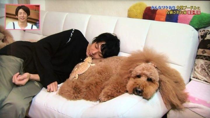 中村倫也が動物愛好家で詳しい理由は?実家の母親が影響している!?