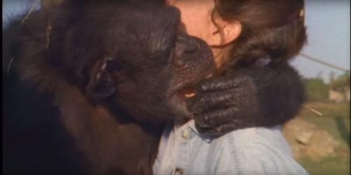 チンパンジー パン くん 殺 処分