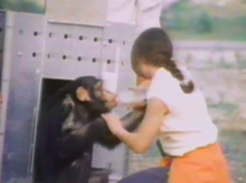 リンダ コーブナー チンパンジー 今 現在 年齢 スイング ドール 死亡 アンビリバボー
